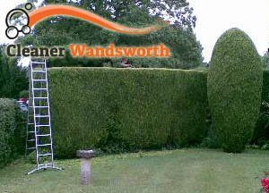 Hedge Maintenance Wandsworth